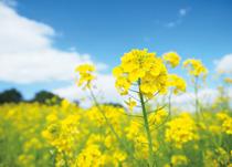 居宅介護支援事業所菜の花
